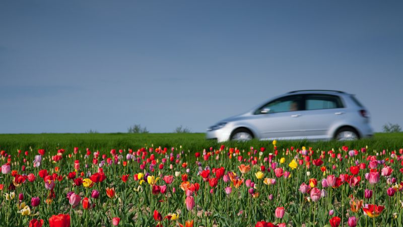 dm-tax-season-spring-your-sales-800x450